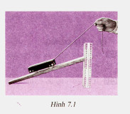 Hình 7.1 bài C4 trang 24 SGK Vật lí lớp 6