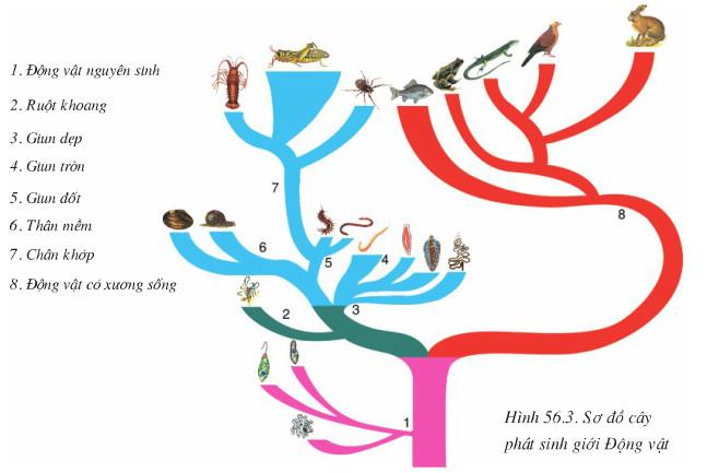 Kết quả hình ảnh cho cây phát sinh động vật