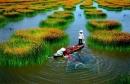Phân tích đoạn đầu của bài thơ Đất Nước - trích trường ca Mặt đường khát vọng của Nguyễn Khoa Điềm.