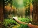 Phân tích hình tượng cây xà nu trong truyện ngắn Rừng xà nu của Nguyễn Trung Thành - Ngữ Văn 12 - Bài 2