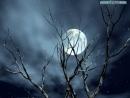 Phân tích biểu tượng của hình ảnh: đầu súng trăng treo trong Đồng chí - Chính Hữu và hình ảnh ánh trăng trong Ánh trăng - Nguyễn Duy.