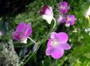 Cảm nhận khổ đầu bài Mùa xuân nho nhỏ của Thanh Hải.