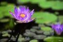 Phân tích khổ thơ trong bài thơ Mùa xuân nho nhỏ của Thanh Hải:Ta làm con chim hót… Dù là khi tóc bạc.