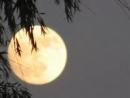 Bình giảng bài thơ Ánh trăng của Nguyễn Duy (bài 2)