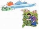 Phân tích bài thơ Khúc hát ru những em bé lớn trên lưng mẹ của Nguyễn Khoa Điềm (bài 2)