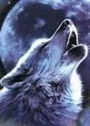 Cảm nghĩ của em sau khi đọc Con chó Bấc trích tiểu thuyết Tiếng gọi nơi hoang dã của G.Lân-đơn.
