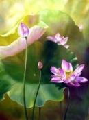 Cảm nhận về bài thơ: Trong đầm gì đẹp bằng sen ...Gần bùn mà chẳng hôi tanh mùi bùn.