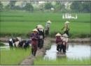 Xã em và Công ti Thiên Nông thống nhất hợp đồng đặt đại lí tiêu  thụ sản phẩm phân bón, thuốc trừ sâu