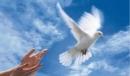 Cảm nghĩ sau khi đọc bài: Đấu tranh cho một thế giới hoà bình.