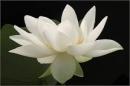 Lẽ ghét thương là lời tâm huyết của Nguyễn Đình Chiểu về nỗi ghét tình thương.