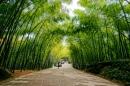 Dựa vào văn bản Cây tre Việt Nam của Thép Mới, em viết một bài văn ngắn trình bày những cảm nghĩ về cây tre Việt Nam.
