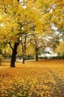 Đọc hiểu Cảm xúc mùa thu