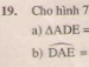 Bài 19 trang 114 - Sách giáo khoa toán 7 tập 1