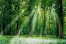 Soạn bài Nhớ rừng