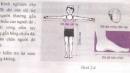 Bài C10 trang 11 sgk vật lý 6
