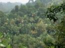 Nguyên nhân nào tạo nên sự phân hóa thiên nhiên theo độ cao? Sự phân hóa theo độ cao ở nước ta biểu hiện rõ ở các thành phần tự nhiên nào?