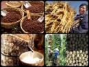 Nền nông nghiệp nhiệt đới có những thuận lợi và khó khăn gì ? Hãy cho ví dụ chứng minh rằng nước ta đang phát triển ngày càng có hiệu quả nền nông nghiệp nhiệt đới.