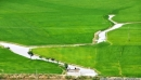 Dựa vào kiến thức đã học, hãy kể tên một số cánh đồng lúa nổi tiếng ở miền núi, trung du Bắc Bộ và Tây Nguyên.
