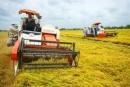 Hãy phân biệt một số nét khác nhau cơ bản giữa nông nghiệp cổ truyền và nông nghiệp hàng hoá.