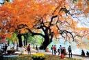 Soạn bài Cảm xúc mùa thu (Thu hứng) trang 147 SGK Ngữ văn 10