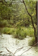 Dựa vào bài 14 (SGK trang 58), hãy nêu các con số chứng minh tài nguyên rừng nước ta bị suy giảm nhiều và đã được phục hồi một phần.
