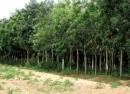 Hãy tìm các ví dụ để làm sáng tỏ ý nghĩa kinh tế và sinh thái to lớn của rừng và vai trò của lâm nghiệp.