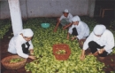 Phân tích cơ cấu ngành công nghiệp chế biến lương thực, thực phẩm (cơ sở nguyên liệu, tình hình sản xuất và phân bố).
