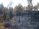 Hãy nêu những nguyên nhân dẫn đến sự suy giảm tài nguyên rừng của nước ta.