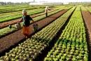 Tại sao việc phát triển các vùng chuyên canh nông nghiệp kết hợp với công nghiệp chế biến lại có ý nghĩa rất quan trọng đối với tổ chức lãnh thổ nông nghiệp và phát triển kinh tế- xã hội nông thôn?
