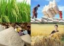 Vấn đề lương thực, thực phẩm trong vùng cần được giải quyết bằng cách nào? Khả năng giải quyết vấn đề này.