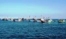 Hãy kể tên các ngư trường trọng điểm của nước ta và xác định các ngư trường này trên bản đồ giáo khoa treo tường nông nghiệp, lâm nghiệp, thuỷ sản (hoặc Atlat Địa lí Việt Nam).