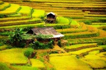 Thanh Hải – Một nốt trầm xao xuyến