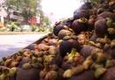 Kể tên một số cây ăn quả đặc trưng của Nam Bộ. Tại sao Nam Bộ lại trồng được nhiều loại cây ăn quả có giá trị? (sgk trang 32)