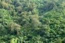 Dựa vào bảng 9.1, hãy cho biết cơ cấu các loại rừng ở nước ta. Nêu ý nghĩa của tài nguyên rừng. (sgk trang 34)