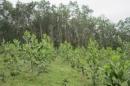 Việc đầu tư trồng rừng đem lại lợi ích gì? Tại sao chúng ta phải vừa khai thác vừa bảo vệ rừng ?