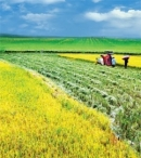 Sự phát triển nông nghiệp đương thời có ý nghĩa gì đối với xã hội ?