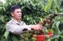 Hãy xác định các vùng trồng cà phê, cao su, chè ở Tây Nguyên. Giải thích vì sao có sự phân bố như thế?(trang 107, SGK)
