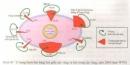 Câu hỏi lý thuyết 2 - SGK Trang 156 Địa lí 10-