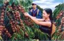 Giải thích tại sao sản xuất nông nghiệp ở các tỉnh Đăk Lăk và Lâm Đồng có giá trị cao nhất