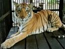 Truyện Con hổ có nghĩa là một truyện hay mang tính giáo huấn sâu sắc. Hãy cho biết cảm nghĩ của em khi đọc truyện.