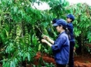 Hãy nhận xét tình hình phát triển nông nghiệp ở Tây Nguyên