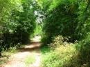 Cảm xúc trữ tình trong bài Cây tre Việt Nam của Thép Mới