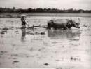 Vì sao nền nông nghiệp thời Lý phát triển ?