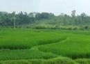 Nhà Lý đã làm gì để đẩy mạnh sản xuất nông nghiệp