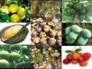 Vì sao ngành chế biến lương thực, thực phẩm chiếm tỉ trọng lớn nhất trong cơ cấu công nghiệp của Đồng bằng sông Cửu Long? (Trang 131 sgk).
