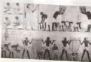 Em hãy miêu tả cảnh làm ruộng của người Ai Cập qua hình 8.
