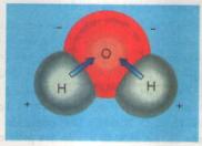 Vai trò nước đối với tế bào