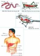 Bài 1,2,3,4 trang 66 SGK Sinh 11