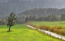 Tả cảnh một cơn mưa