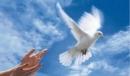 Mở rộng vốn từ: Hòa bình trang 47 sgk Tiếng Việt lớp 5